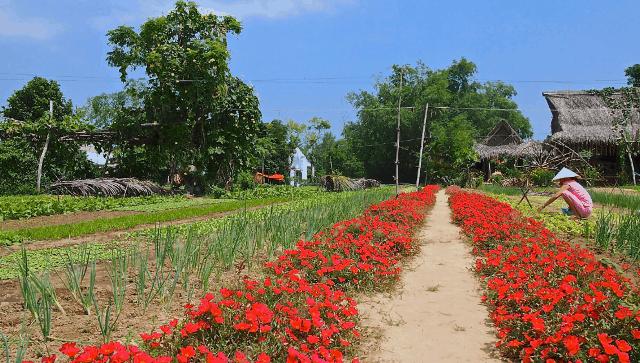 Tra Que herb Village- Culture Pham Travel
