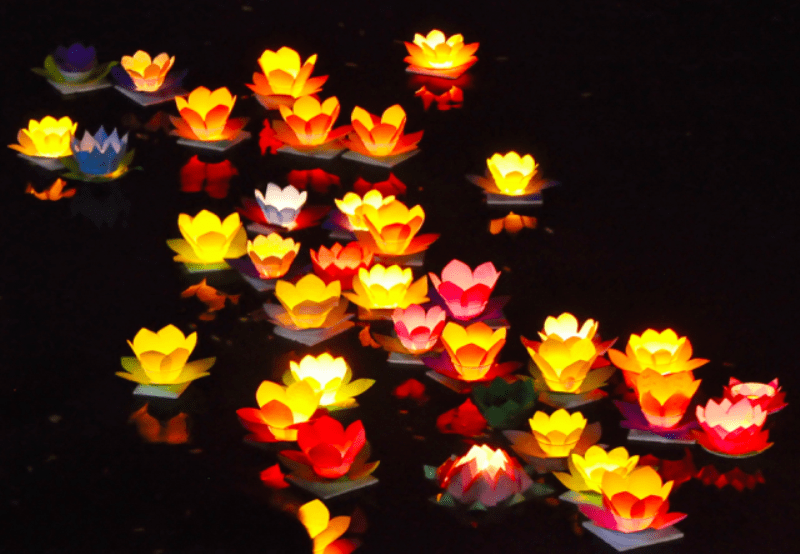 Paper lotus lantern lights