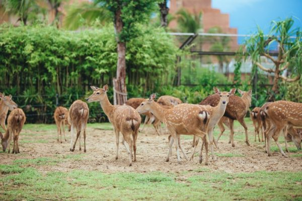Da Nang to Vinpearl Land- Culture Pham Travel