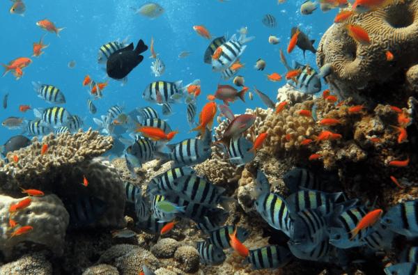 Cham Island Snorkeling Tour- Culture Pham Travel