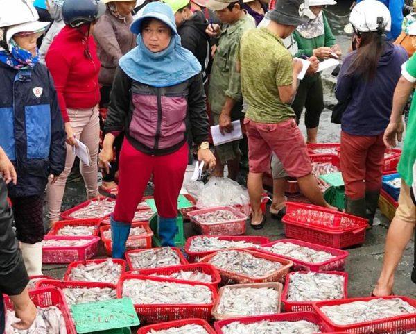 Hoi An Sunrise Fish Market- Culture Pham Travel